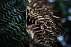 Fern tree (jgazzignato) Tags: green tree ferntree hobart mount wellington snow nature trees