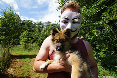 The cutest puppy you've seen in long (Red Cathedral uses albums) Tags: convention cosplay aztektv eventcoverage anonymous guyfawkes mask vforvendetta berlare belgium oostvlaanderen camping offgrid backtobasics maskedfaces activist activism hacktivist puppy dog husky disobey occupy