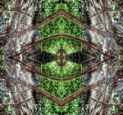 Web design (rhonda_lansky) Tags: green emerald greencolors greenabstract plantabstract devine soul spiritual surreal poem poetic shortstories plants formations depth depthofsight stare greenplants greeneyes nature design abstract leafart shapes abstractleaves abstractoutdoors outdoor mirroredshapes mirroredabstract mirrorart symmetryart symmetrical symmetricalart symmetryartist symmetricalartist abstractart earth expressive lansky landscape leaves visual abstractplant foliage leaf rhondalansky fantasy pattern organicpattern texture plant tangle eye shape