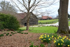 Serenbe spring (Krasivaya Liza) Tags: serenbefarms serenbe farms palmetto ga georgia animals march 2016 barns fences fencefriday