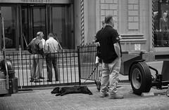 Asleep on the Job (C@mera M@n) Tags: nyc ny newyorkphotography monochrome photojournalism candid newyorkcityphotography financialdistrict newyorkcity dog newyork blackandwhite candidpeople continentalbankbuildingfireaugust92016 places wallstreet unitedstates us
