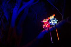 _MG_5326-HDR.jpg (Tibor Kovacs) Tags: lights festival tarongazoo vivid australia colors monkeys sydney night colours
