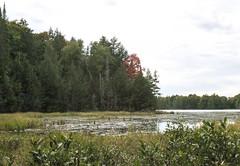 North end of Jackson Lake Marsh (Bill Smith1) Tags: asahipentaxkx believeinfilm billsmithsphotography fall2016 heyfsc jacksonlake lomo400c41 muskoka smcpentaxm50f14lenslens filmshooterscollective