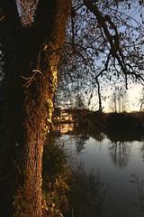 Un arbre contemplant le coucher de soleil ~ (ccilearmand) Tags: france tree green nature water photography nikon village country promenade isle verdure d3100