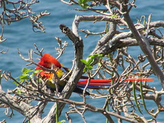 hula hoop sat 040 (Learn, Love, Conserve) Tags: hulahoop saprissa puntaleona feriaverdearanjuez