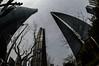 DSC_0270-8 (tamas.doczi) Tags: china skyline nikon skyscrapers shanghai fisheye 中国 尼康 摩天大楼 pudongskyline 上海环球金融中心 鱼眼镜头 theopener wordfinancialcentershanghai