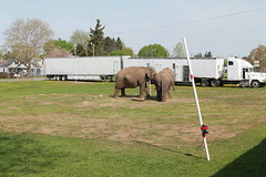 Look's who in town (excellence III) Tags: camping out town small elephants in