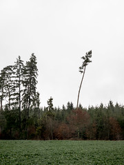 Crooked Tree (haslo) Tags: tree landscapes olympus weathered lonely crooked omd em1 115in2015