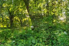 Park Life 36 (pni) Tags: park tree leaf vegetation multiexposure multipleexposure tripleexposure helsinki helsingfors finland suomi pekkanikrus skrubu pni