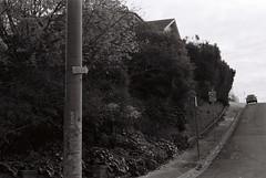 Maribyrnong (pablo.sutton) Tags: street trees bw film car noiretblanc suburban pole gutter analogue milkbar speedlimitsign 50mmf18 ilfordhp5400 filmisnotdead nikonfm2n kurb hillvale