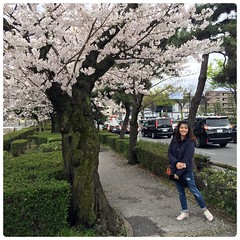 IMG_5054a (Danburg Murmur) Tags: kyoto  kyto nihon nippon nipponkoku nihonkoku   japan woman cherrytree cherryblossoms flowers trees foliage bushes branches petals car automobile bluejeans sneakers coat