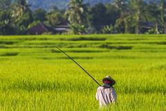 ChiangRai_5993 (JCS75) Tags: canon thailand asia asie chiangrai thailande
