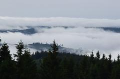 Fog over the trees - Nebel ber den Bumen (Lala89_Photos) Tags: fog nebel landschaft landscape forest wald view aussicht black blackforest schwarzwald