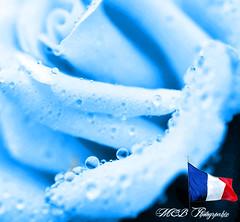 Hommage aux victimes du 14 juillet 2016  Nice (marieclairebarbier) Tags: 14 hommage juillet tristesse 2016 victimes colere
