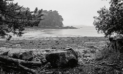 Golfe du Morbihan, B&W, 12 (Patrick.Raymond (2M views)) Tags: bretagne morbihan golfe argentique tmax berder plage mer pluie nikon expressyourself
