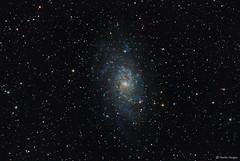 The Triangulum Galaxy (M33) (Martin_Heigan) Tags: triangulum galaxy m33 astronomy astrophysics astrograph martin heigan astrophotography telescope newtonian reflector celestron avx nebula color colour deepsky dso space science physics canon 60da mhastrophoto july2016 karoo highiso astrometrydotnet:id=nova1636496 astrometrydotnet:status=solved localgroup amateurastronomy stars spiral cosmos universe theinconceivablenatureofnature ngc604 ngc595 ngc592 ngc588 ngc603 ngc598 deepskyobject sterrekunde messier pi sgp ic139 ic140 ic142 ic143 ic131 ic132 ic133 ic134 ic135 ic136 ic137 astroimaging