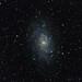 The Triangulum Galaxy (M33)