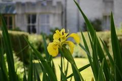 WWG14DSC_5820 (kjemem) Tags: orkney scotland wookwickhouse flower flowers