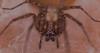 Wolf spider (jim w-y) Tags: spiders sigma 150mm kent arachnid web garden fangs 8legs legs macro closeup shed