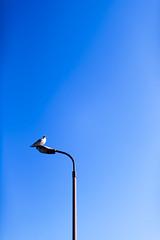 (SATAAKI HARAYAMA) Tags:  bird blue sky sora