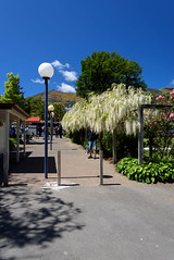 A Few Clouds Appearing (Jocey K) Tags: akaroa newzealand bankspeninsula southisland buildings lamps people flowers palmtrees hills trees roses wisteria
