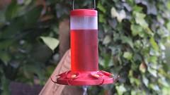 Costa Rica Hummingbirds (video) - Nikon D750 - Nikkor 85mm f/2 AI-S (divewizard) Tags: nikond750 nikon d750 dslr fx nikkor85mmf2ais nikkor 85mm f2 ais 85mmf2ais chrisgrossman varablanca herediaprovince costarica heredia lapazwaterfallgardens peacelodge aviary bird colorful cloudforest rainforest hummingbirds video stereo feeder