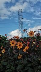 2015-01-16 09.28.00 (kiwinproud) Tags: aucklandbotanicalgardens