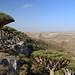 Firmhin Plateau