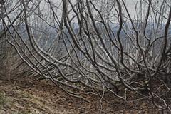 Local flora (gabriel amadeus) Tags: mountain saint bike forest bicycling volcano washington pacific northwest mountainbike abraham canyon nationalforest mount trail mtb ape helens plains pnw sthelens singletrack