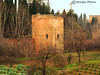 Within the Alambra (moelynphotos) Tags: trees building garden spain granada historical alambra moelynphotos