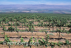 CALIFORNIA - View of Salinas Valley from vinyards that line the hillsides (Remsberg Photos) Tags: california usa green landscape view wine farm farming salinas vineyards grapes crops agriculture salinasvalley hillsides