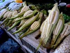 Peruvian maize (Mel s away) Tags: peruvian maize cusco peru  corns plant food eat chanmelmel mel melinda agriculture melindachan chanmelmel life inca heritage