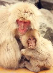 Snacktime (Ivonne G.) Tags: japan spring heart maiko geiko geisha macaque snowmonkey japaneselanterns