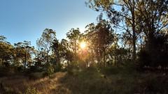 18 POINT SUN STARS (16th man) Tags: canon eos australia qld queensland westbrook 18pointsunstars eos5dmkiii