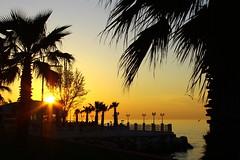 hicaz ile segah makam aras (misinzevkiselim) Tags: deniz palmiye gn batm martlar
