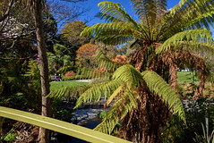 The River is Dry (Jocey K) Tags: bridge flowers trees newzealand christchurch sky people river spring stream shadows lawn azalea treefern ilamgardens