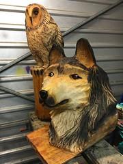 husky owl web1
