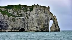 Etretat ,  la Falaise d'Aval ... (miriam ulivi) Tags: sea cliff nature mare falesia francia gabbiano normandia scogliera seagulll entretat nikond7200 miriamulivi