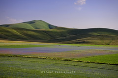 _DSC7064-2 (stefano.paglialunga1) Tags: summer landscape nikon colore estate natura erba campo fiori montagna campi sibillini allaperto nikond7000 distesaerbosa