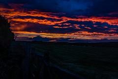 Blazing sunset @ Lanchester (21mapple) Tags: lanchester sunset blue red orange sheep fields trees powefull sun grass fence northumberland