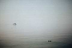 - (nenija) Tags: italy lake bird film nature water analog 35mm canon boat duck garda italia ship kodak analogue canonae1program gardalake lagodigarda veneto kodak200 filmphotography