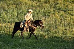 Cowboy In Early Morning, Grand Teton National Park, Wyoming (David C. McCormack) Tags: ranch horses horse cowboys rural sunrise cowboy riding rockymountains recreation wyoming rider grandteton horseback jacksonhole roundup grandtetonnationalpark duderanch jacksonwyoming
