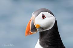 So cute D50_1870.jpg (Mobile Lynn) Tags: wild england nature fauna wildlife northumberland gb farneislands coth greatphotographers specanimal