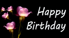 Happy Birthday Flowers (Cia81) Tags: rose roses flowers buds blooms black background blossoms romance pink love nature flower blossom romantic floral isolated petal valentine pastel spring botanical mothersday valentinesday birthday