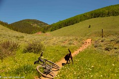 Easy Ride up a Valley (KB RRR) Tags: dog nature colorado wildflowers crestedbutte chocolatelabrador shyla