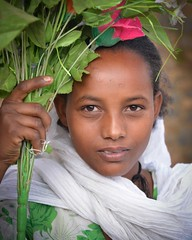 Tigray Girl (Rod Waddington) Tags: africa african afrika afrique ethiopia ethiopian ethnic etiopia ethnicity ethiopie etiopian tigray cultural culture portrait people flowers outdoor shamma young girl female