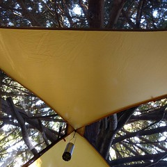 The perfect #tent spot, under a gigantic #cedar #tree! #camping #BullocksPermacultureHomestead (Heath & the B.L.T. boys) Tags: instagram farm permaculture camping tent tree lantern oldgrowth