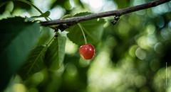 Cherry (imagomagia) Tags: art artphoto artphotography bokeh cherry fruit nature
