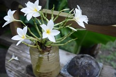 (lulun & kame) Tags:  flower  soufriere plant dominica america  lumixg20f17