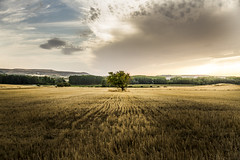 HAZA (CASTILLA Y LEN) (T.Miravalles) Tags: haza aza castillayleon rbol natura naturaleza landscape paisaje paisaia nubes cielo tierra campo tiempolibre soledad